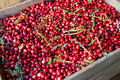 Crate of Cranberries Stock Photography
