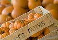 Crate of pumpkins Stock Photo