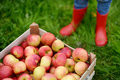 Crate with red organic apples and children boots s Stock Photo