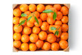 Crate ripe tangerines top view standing white Royalty Free Stock Image