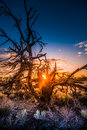 Craters of the Moon Devil`s Orchard at Sunrise Royalty Free Stock Photo