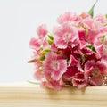 Cravos chineses bonitos cravo da índia chinensis com detalhes em uma superfície de madeira Imagem de Stock Royalty Free