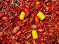Crawfish Boil Royalty Free Stock Photo