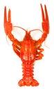 Crawfish Royalty Free Stock Photo