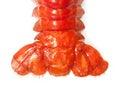 Crawfish tail close up isolated on white background Stock Image