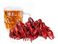 Crawfishes Royalty Free Stock Photos