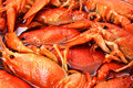 Crayfish closeup Royalty Free Stock Photography
