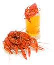 Crayfish and a glass of beer on white background Royalty Free Stock Photo
