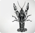 Crayfish hand drawing. Vector illustration. Stock Photo