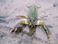Crayfish On The River-Bank Stock Images