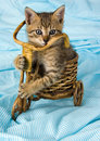 Crazy cat Royalty Free Stock Image