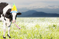 Crazy cow in front of tiroler mountains Royalty Free Stock Photo