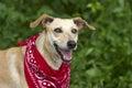 Crazy Dog Eyes Royalty Free Stock Photo