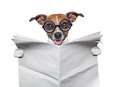 Crazy dog reading news silly holding a blank newspaper Royalty Free Stock Photo