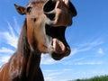 Crazy Horse Stock Photo