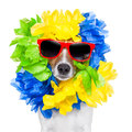 Crazy sill dog silly brazilian with red sunglasses and flower chain Stock Photography