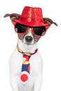 Crazy silly funny dog hat glasses  tie Royalty Free Stock Photo
