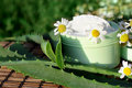 Cream with aloe vera and daisies Royalty Free Stock Photo