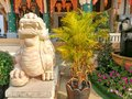 Cream color Chinese lion statue in front of Thai temple. Royalty Free Stock Photo