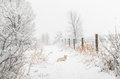 Cream colored dog in snowstorm fence line to right Stock Images