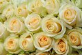 Cream colored roses background of beautiful Royalty Free Stock Images