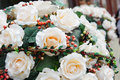 Creamy roses Royalty Free Stock Photo