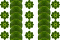 Create from leaf and pattern Stock Image