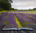 Creative concecpt lavender fields magic book Royalty Free Stock Photo