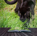 Creative concept image of black jaguar Stock Photography