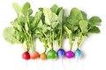 Creative conception of fresh coloured radish Stock Photo