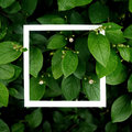 Creative layout made leaves with white paper frame. Flat lay. Nature concept