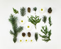 Creative natural layout of winter plants parts on white background. Flat lay, top view