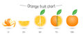 Creative orange fruit chart Royalty Free Stock Photo