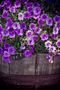 Creative purple petunia Royalty Free Stock Photos