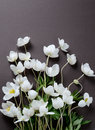 Creative top view layout with White Anemone flowers on a black background. Minimalist background.