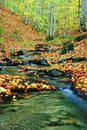 Creek in autumn Royalty Free Stock Photo
