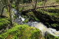Creek in the beautiful wilderness the summer mountains sumava in southern czech Royalty Free Stock Photography