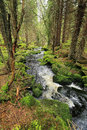 Creek in the beautiful wilderness the summer mountains sumava in southern czech Royalty Free Stock Photo