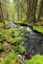 Creek in the beautiful wilderness the summer mountains sumava in southern czech Stock Photos
