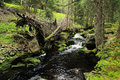 Creek in the beautiful wilderness the summer mountains sumava in southern czech Royalty Free Stock Images