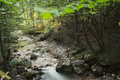 Creek in a deciduous forest Royalty Free Stock Photo