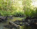 Creek with fern in foreground Stock Image