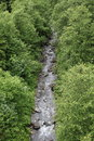 Creek in forest by mittersill alps austria at summer time Stock Photography