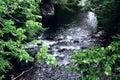 Creek In Gatlinburg