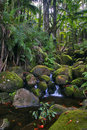 Creek in jungle of Hawaii Royalty Free Stock Photo