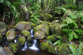 Creek in jungle of Hawaii Stock Photography