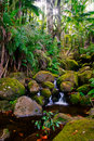 Creek in jungle of Hawaii Stock Image