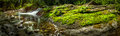 Creek moss and rocks in belianske tatry mountains slovakia Royalty Free Stock Photo