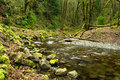 Creek in rain forest Royalty Free Stock Image