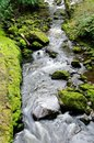Creek in rain forest Stock Images